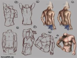 Male Torso Studies I by theBlackDeath