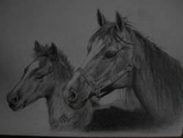 Mare and foal by drinkerofthewind