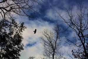 Crow Fly by MeFlyingFree