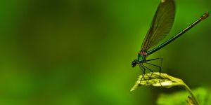 dragonfly 4 by LordBurevestnik