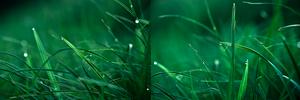 Them grass by Dullface
