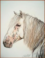 Drawing - Altai horse by Ennete