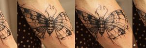 Big Moth by LucianoPezzoli