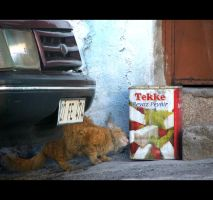 Cat and Cheese by TuRKoo