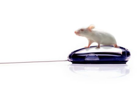 Mouse Mouse by Cannibal
