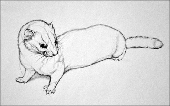 A Smaller Weasel by nikkiburr