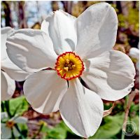 White Flower by emailartist26