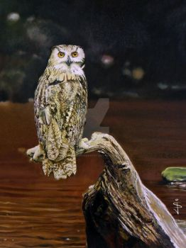 Eagle Owl by NorthumbrianArtist