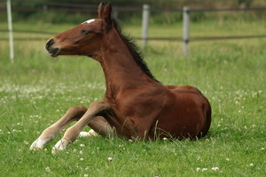 Foal stock 76 by Bundy-Stock