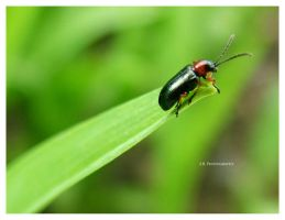 Beetle 2 by selley