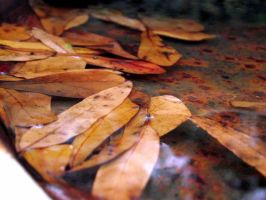 Fall Leaves Fall by ophelia1022