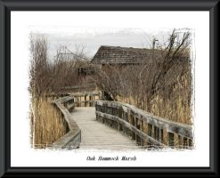 Oak Hammock Marsh by dove-51