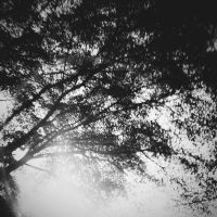 BW : Uproot by silverroses222