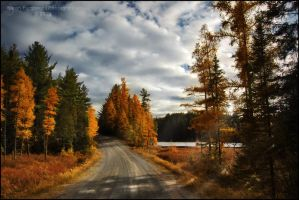 Tamarack Road by Sarah--Lynne