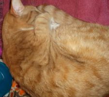 Twinkie Twinkletoes curled up in a nap by MystMoonstruck