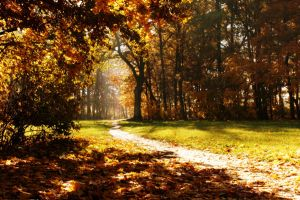 Autumn path by BantoCat
