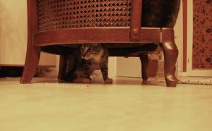 Under the chair by RevelloDrive1630