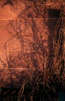 vines -- Shape line and shadow by 000nevermore000