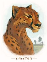 -Cheetah- by zuckerglider