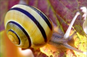 Snail. by Evey-Eyes