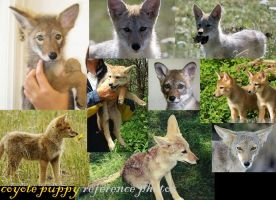 Coyote PUPPY ref Pix by AtFirstPlush