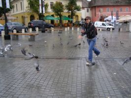 pigeon chase by oqmioritzei