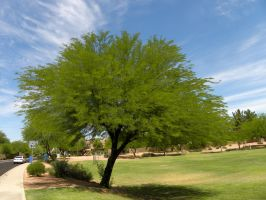 Green tree in a desert by Agatje