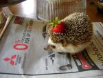 Strawberry Hat by ionshu