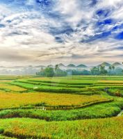 Paddy rice panorama I by MotHaiBaPhoto