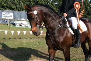 show jumper by thegeforce