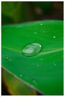 Drops of green by Lepeng