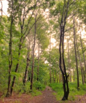 A trail in the woods by WilsenIrre