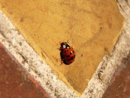 Coccinelle by Betagalactosidase