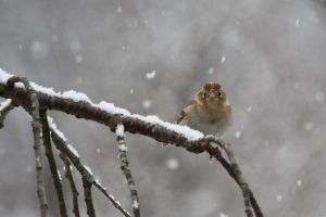 Bird in the snow 2 by GoodAvian