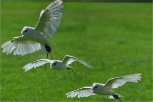 In Flight by Kai--Photography