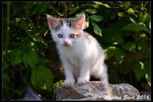 Baby Cat - Day 1 by HobbyFotograf