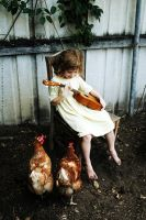 Chicken Music by tracieteephotography