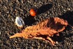 Emblems Of Autumn No. 1 The Horse Chestnut by aegiandyad