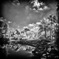 Paradise Garden - infrared by MichiLauke