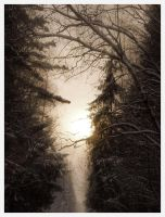 Sunlight at winter forest by eRiver