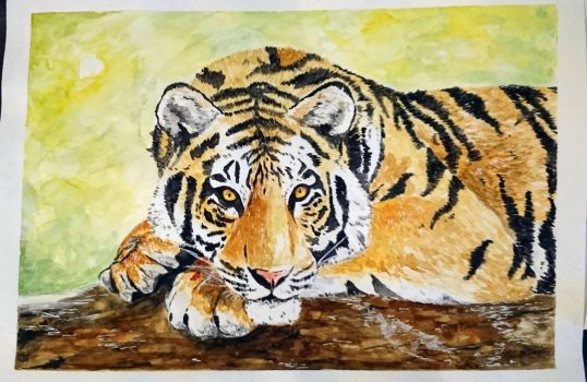 Tiger's Daydream by Comisario