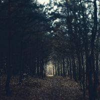 following the path by Mortsnort