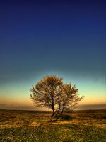 Stand Alone by punk-s-not-dead