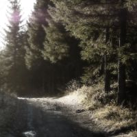 On the Way Home IV by UlfStubbe