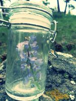 To Bottle Nature by LotusQueen-Andi