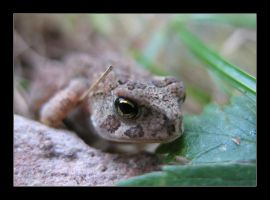 Toad 3 by MichelleMarie