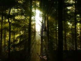 Light in the Forest by sazzyarmani