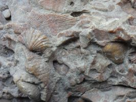 Fossil Stock 1 by Ox3ArtStock