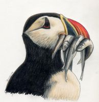 Puffin's Lunch by rissdemeanour
