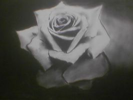 Black Rose by erezija